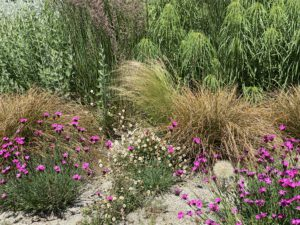 StaudenBeet mit Gräsern geplant und angelegt - Beetplanung