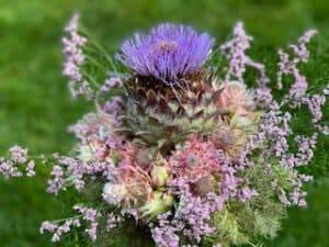 Blumenstrauß mit Artischocke Sommerblumen Distel - Kontakt