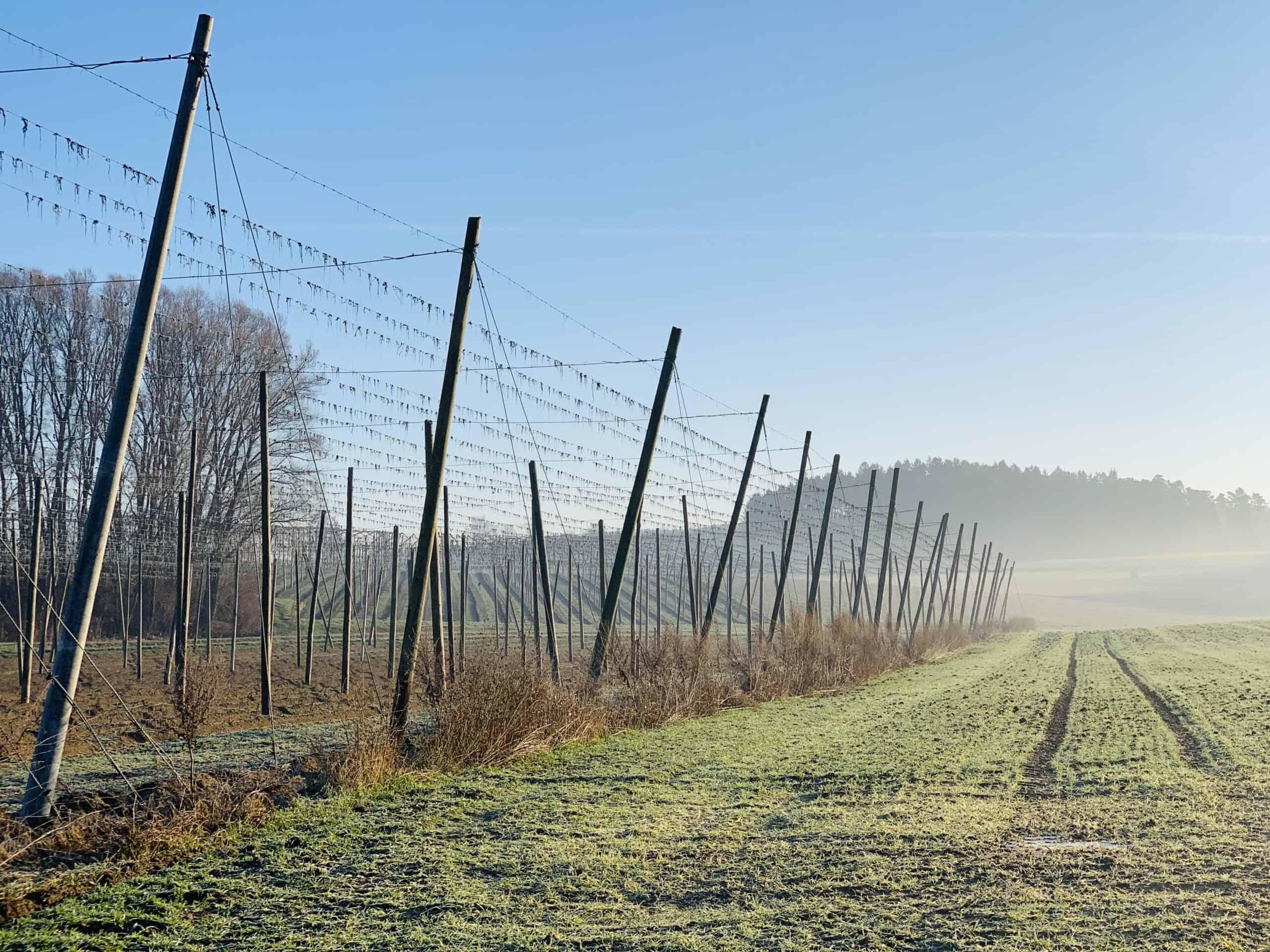 Hopfen Garten im Winter in der Hallertau - Nähe Pörnbach - hier wird ab Mai Hopfen für frischen Hopfenkranz wachsen
