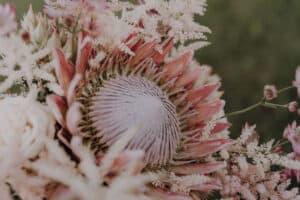 StyledShooting 334 Gartenglück & Blütenkunst